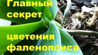 ☙ Как заставить орхидею цвести в домашних условиях(, 2016-06-14T12:17:23.000Z)
