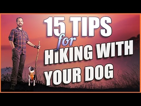 Hiking With Dogs - 15 Killer Tips to Get Going