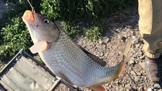 Рыбалка на удочки и макуху Карп весной 2020
