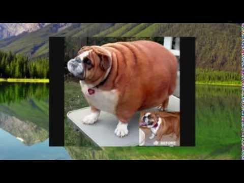 Толстые собаки и коты