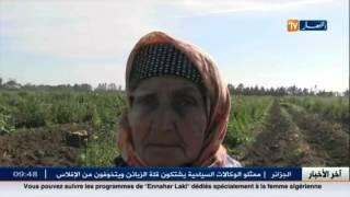 الأخبار المحلية : أخبار الجزائر العميقة ليوم 03 جانفي 2016