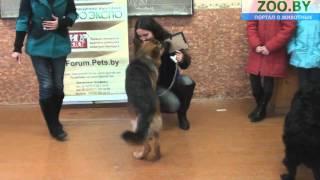 Ребенок и собака (13-17 лет)