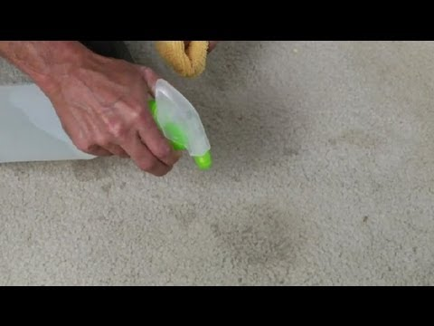 How to clean old coffee stain out of carpet