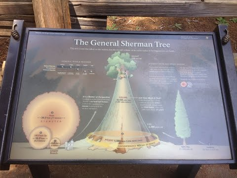 A Tree Named General Sherman - Giant Sequoia