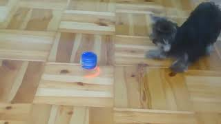 Best Of Cute Yorkie Puppies Compilation  Funny Dogs 2021