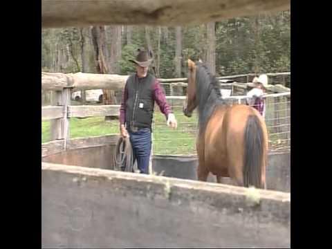 Saving Australia's brumbies (wild horses) from aerial shooters