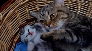 How to raise happy children - 10 tips from  Mom  Cat Coco