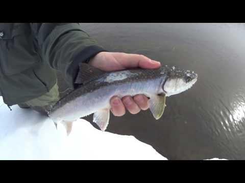 Река Авача, Камчатка - Нахлыстовая рыбалка в марте 2017