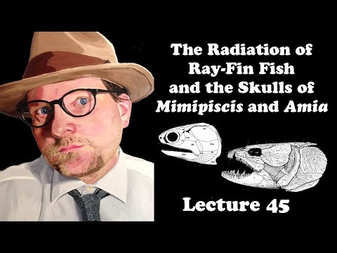 Lecture 45 The Radiation Of Ray-Fin Fish And The Skulls Of Mimipiscis And Amia