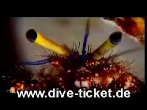 gratis dive-ticket.de DVD Ocean nights by flight-ticket.de - chrisshootings