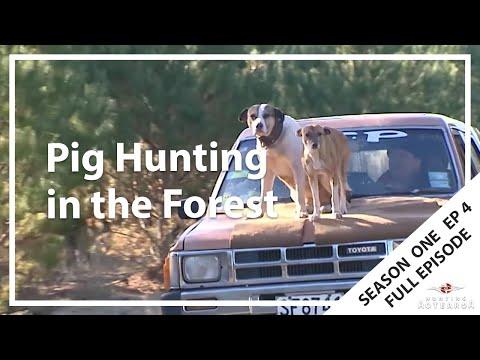 Hunting Aotearoa S01E04 - Tokoroa & Kaingaroa Forest Pig Hunting