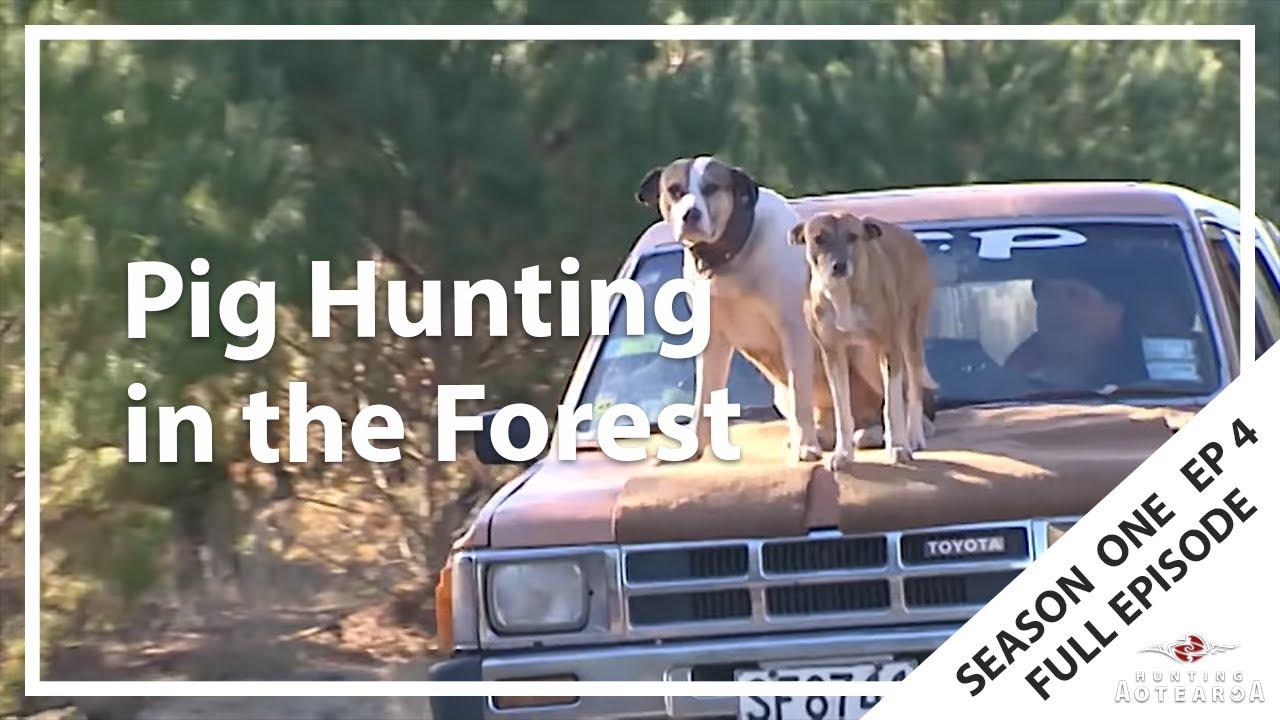 Hunting Aotearoa S01E04 – Tokoroa & Kaingaroa Forest Pig Hunting
