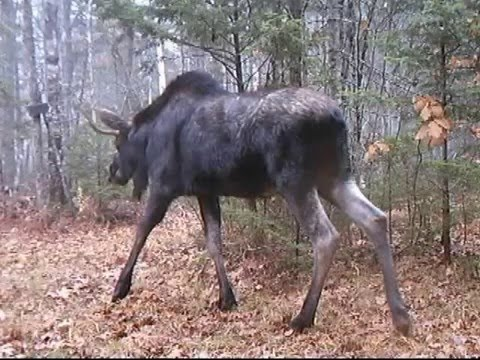 2015 12 09 summer fall winter trail cams
