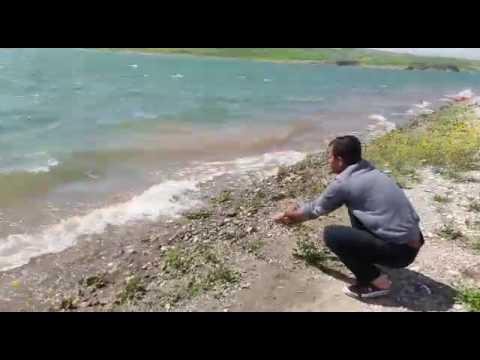 Atatürk barajın da dip oltasiyla sabut balığı yakalama ani