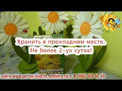 Осот (растение) – полезные свойства и применение осота