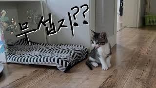 에브리봇엣지 vs 아기고양이 까미(소리필수)
