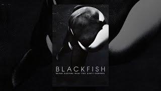 Blackfish (OmU)