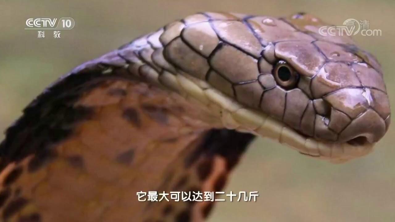 Download 20170910 地理中国  奇石怪象·发光的蛇眼石(上)