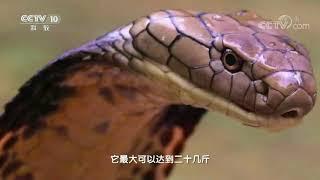 20170910 地理中国  奇石怪象·发光的蛇眼石(上)