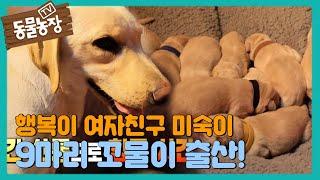 [심쿵] 미숙이, 사랑스러운 꼬물이 9마리 무사 출산♥ I TV동물농장 (Animal Farm) | SBS …