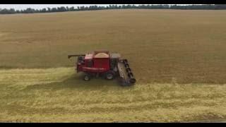 Barley harvesting MF9690+John Deere 9670