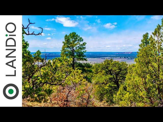 SOLD by LANDiO •20 Wooded Mountain Acres of Land in New Mexico bordering National Forest