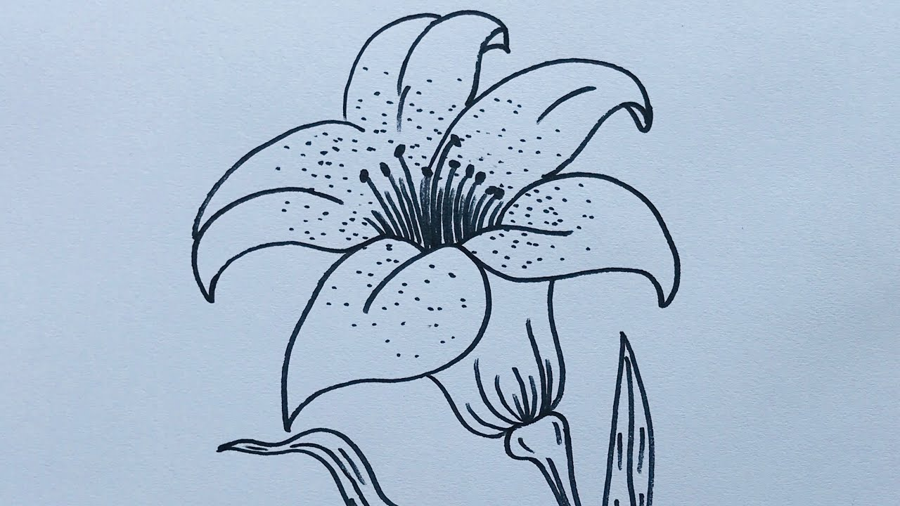 How To Draw A Lily Flower Easy Step By Step Draw Flowers Youtube