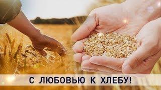 Уборочная-2019: с любовью к хлебу – про урожай через людей