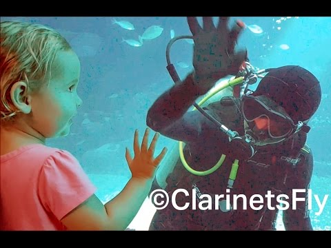 Amazing Diver at SEA Aquarium Singapore, Resorts World Sentosa