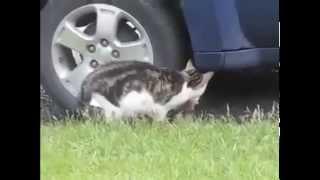 смешные кошки и котята Прикол Кот и собака против оленя