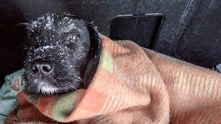 Спасение черной собаки попавшей под машину История очевидцев Новосибирск