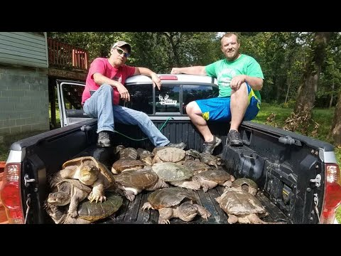 How To Noodle Snapping Turtles (I Catch 3 In The Video)