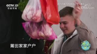 《地球村日记》 20200615 福建省莆田市 第六天|CCTV农业