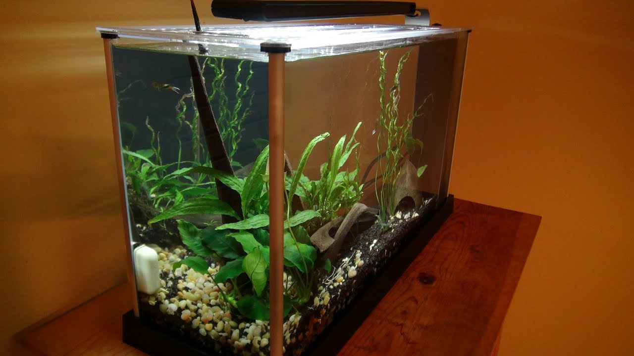 Fluval spec 5 gallon unboxing setup youtube for 5 gallon fish tank heater
