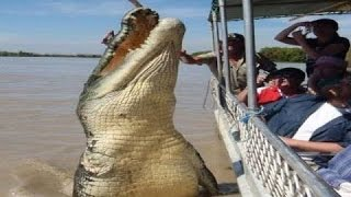 Crocodile King - National Geographic Documentary thumbnail