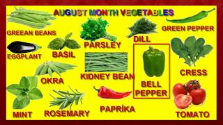 Fun and Educational Puzzle to Teach August Vegetables! Little  Children's Channel