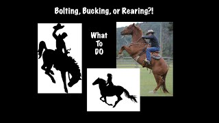 What to do When Your Horse Bucks, Bolts, or Rears?
