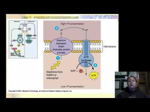 crash course metabolism and nutrition pdf