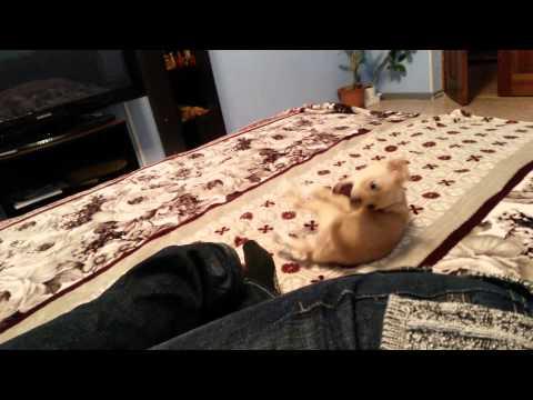 щенячья радость 2