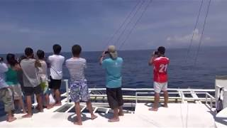 Marine Mammal Field Course 2012 (Bohol Sea, the Philippines)