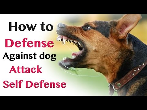 Thumbnail: how to defend against dog attack- self defence