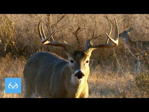 WIDE Buck Chases Does   Michael Waddell In Mexico   Monster Bucks Monday