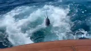 2020 Bisbee's East Cape Offshore | Big Oh | Striped Marlin