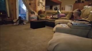 drift dog funny video cut