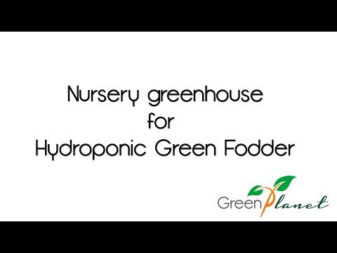 Hydroponic Green Fodder nursery greenhouse