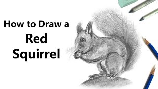 How to Draw a Red Squirrel with Pencils [Time Lapse]