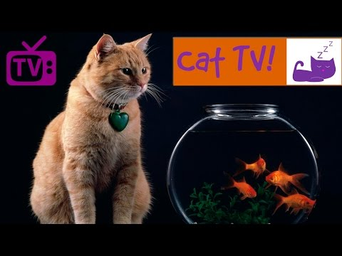 Cat TV - 30 Min Fish Swimming in Tank Combined with Relaxing Music. Engaging TV for Cats. Ep 3