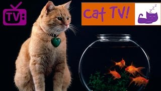 Cat TV - 30 Min Fish Swimming in Tank Combined with Relaxing Music. Engaging TV for Cats. ...