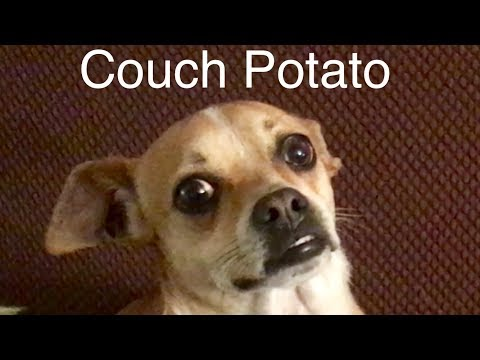 Couch Potato Dogs Youtube