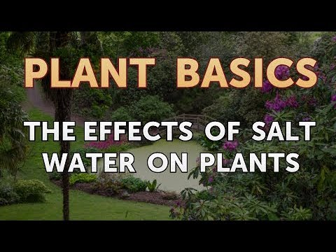 The Effects Of Salt Water On Plants